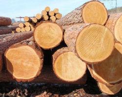 Инфракрасная сушилка для древесины