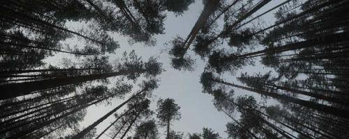 Важное свойство бруса: плотность и влажность сосны