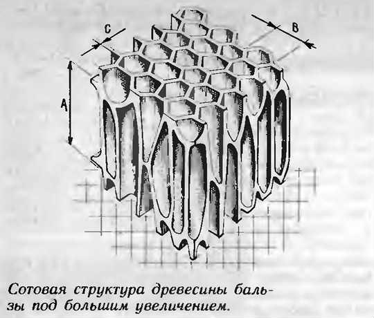 сотовая структура древесины