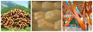 Стадии древесины от кругляка до гнутой балки